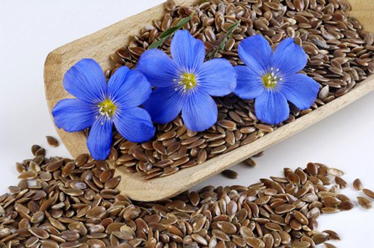 Семена льна противопоказания