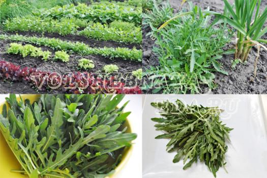 salad-rukkola3