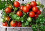Мини овощи по макси ценам