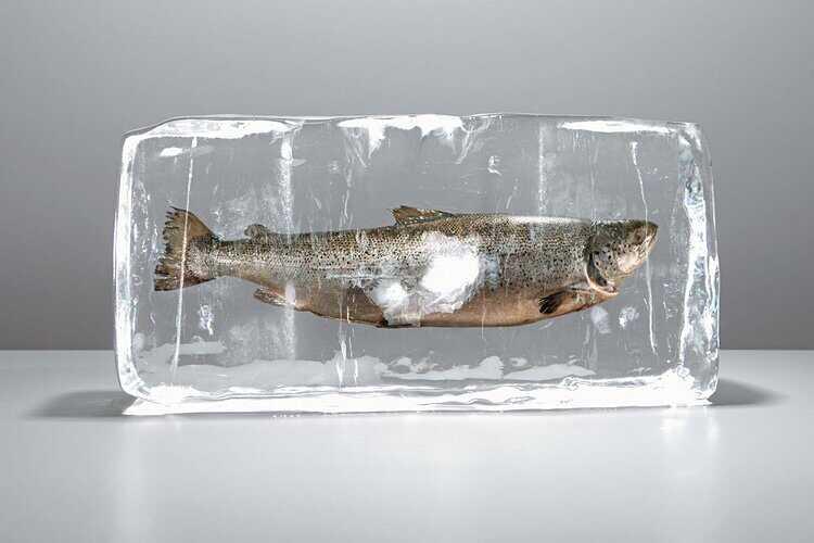 kak vybrat zamorozhennuyu rybu 5