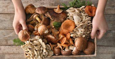 Секреты приготовления грибов
