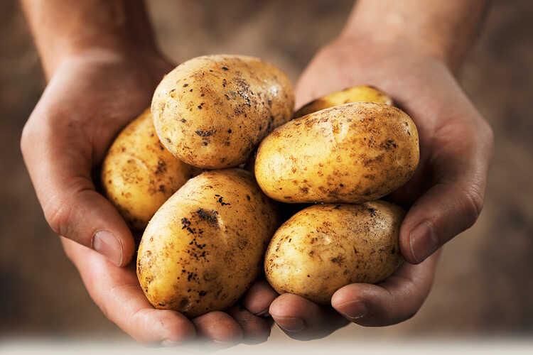Как не отравиться любимой картошкой